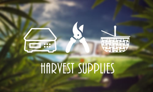 Cannabis Harvest Supplies