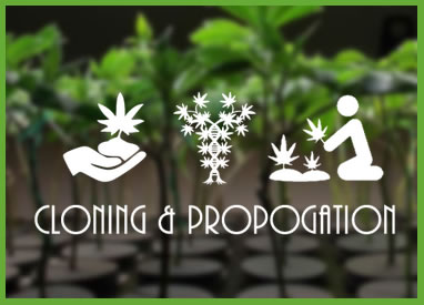 Cloning & Propagation Category