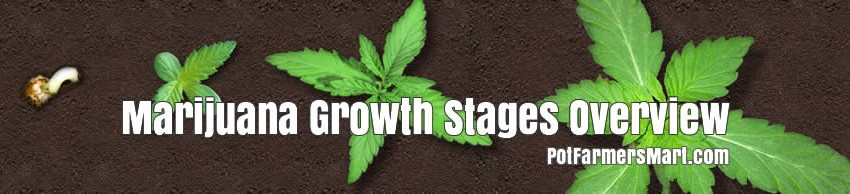 Marijuana Growth Stages Review